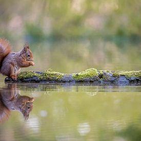 Etend eekhoorntje van Gonnie van de Schans