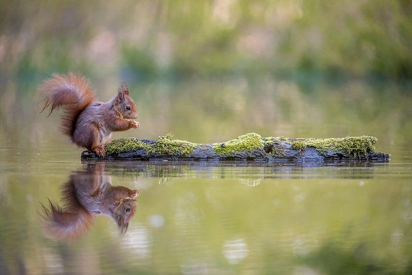Etende eekhoorn van Gonnie van de Schans