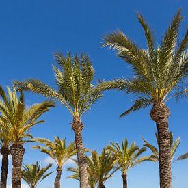 Palmbomen van Frank Herrmann