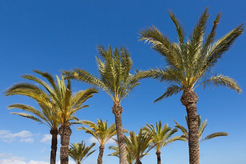Les palmiers sur Frank Herrmann