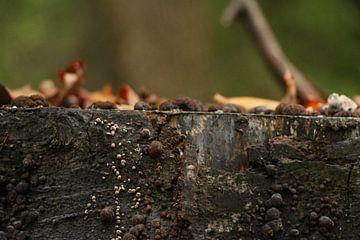 Boomstam met blaadjes en paddenstoeltjes van Charissa Oudejans