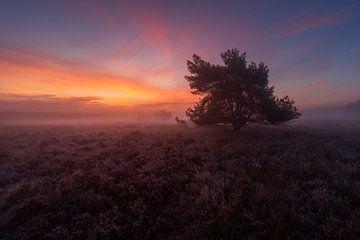 Mistige zonsopkomst Veluwe von Rick Kloekke