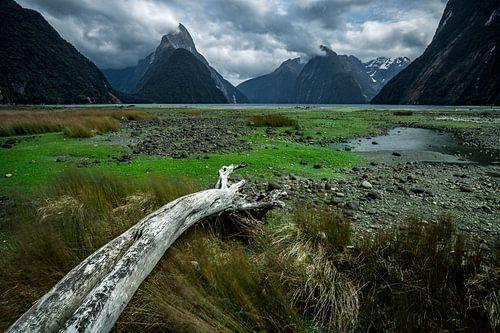 Milford Sound - Zuidereiland, Nieuw-Zeeland