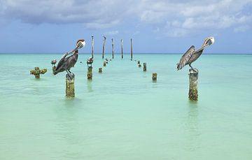 Pelikane in Harmonie von Wim van Berlo