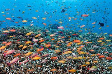 Rainbowed Sea van Norbert Probst