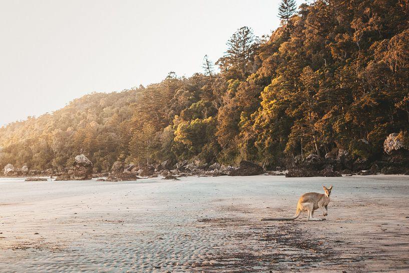 Wallaby op het strand in Australië van Amber Leeman