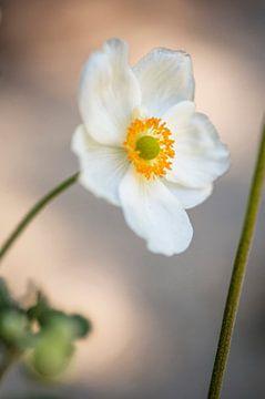 Blume # 14 von tim eshuis