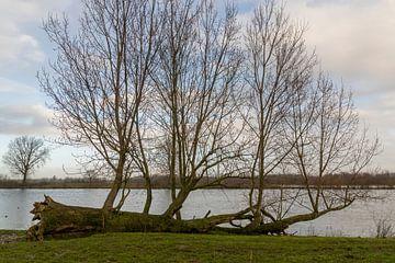 De Maas met op de oever een omgevallen boom. van Lieke van Grinsven van Aarle