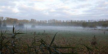 Ochtendmist in het Brabantse Halder van Kees van Dun