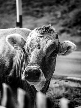 Porträt einer Kuh von Rianne Jacobs