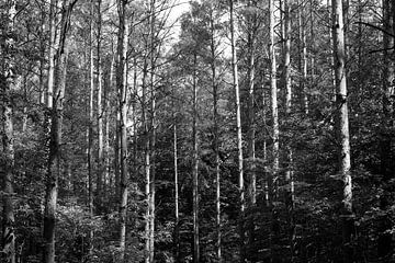 Wald von Thomas Jäger