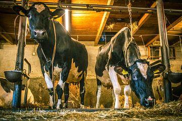 Kühe im Gruppenstall von Erica Kuiper