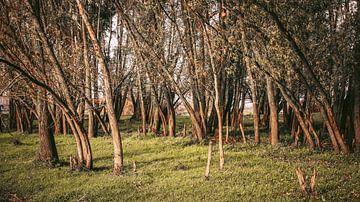 Bäume von AciPhotography