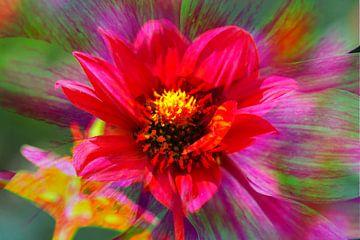 rood, bloeiende dahlia, abstract, bloem van Torsten Krüger