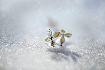 So kommt der Schnee nach dem Feuer von Gitta Reiszner