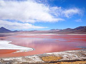 Het rode meer, Laguna Colorada in Bolivia