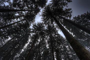 Bomen van onder van melvin leloup
