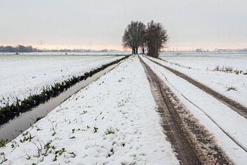 Wielsporen in de sneeuw van Ruud Morijn
