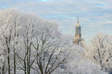 efrorene Bäume mit dem Nieuwe Toren (Neuer Turm) in Kampen von Sjoerd van der Wal