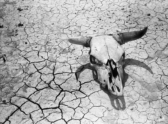 Koeiensschedel met hoorns en droge en gescheurde aarde in de badlands van Zuid Dakota 1936
