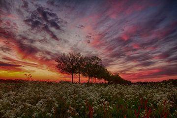 Kleurrijk voorjaar van Tom Kruissink