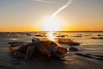 Starfish @ the Beach von Foto van Anno