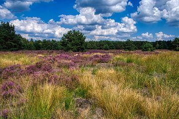 Blauer Himmel und lila Heidekraut, die Weerterheide eine Augenweide. von J..M de Jong-Jansen