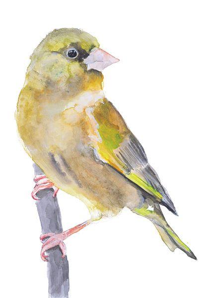 Der Grünfink Vogel Illustration von Angela Peters