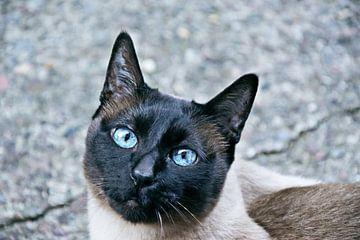 Blauwe ogen van