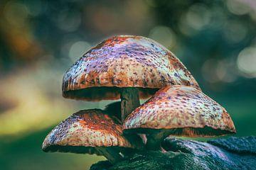 Pilze auf einem Baum von bart dirksen
