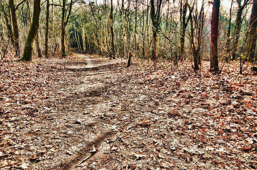 Bos wandeling hier Links af van Erik Reijnders