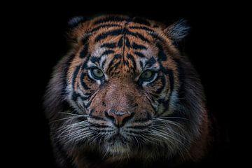 Tigerkopf auf schwarzem Hintergrund von Ron Meijer Photo-Art