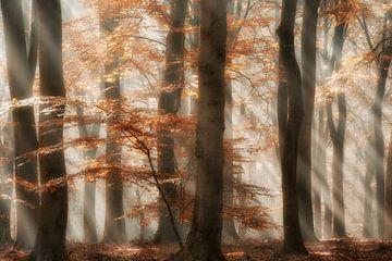 Rays of Grace sur Lars van de Goor