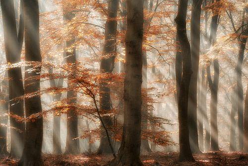 Rays of Grace von Lars van de Goor