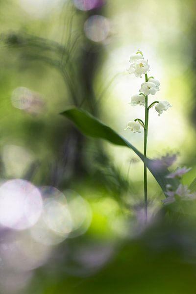 Springtime van Bob Daalder