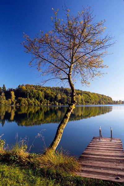 Herbst am See von Rudolf Brandstätter