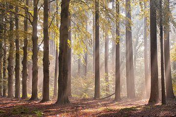 Stralende ochtend in het bos