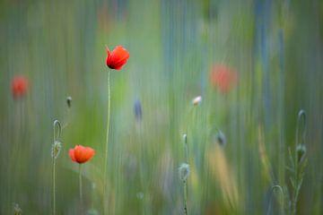 Rote Rosen & grün von YvePhotography