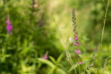 Schmetterlings Paradies von Charlene van Koesveld