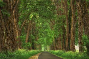 Spring Road von Martin Podt