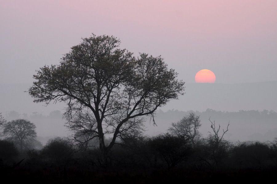 Black tree, red sun