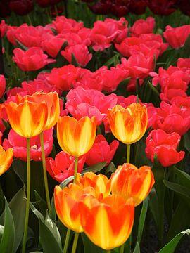 Koninklijke bloemen von Mike Gatting
