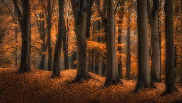 Autumn von Bart Hendrix