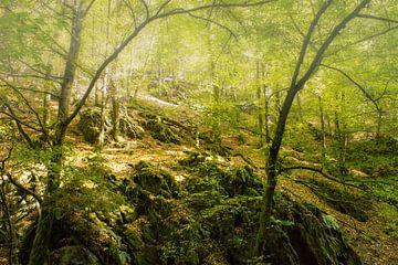 Mystiek bos in de zomer van