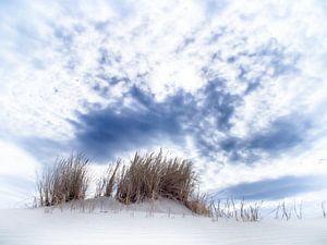 Jonge duinen op Schiermonnikoog