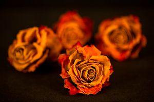 Rosenarrangement von