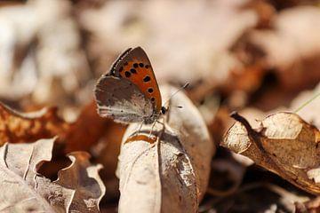 Vlinder met schutkleur van Noor van Duijvenboden