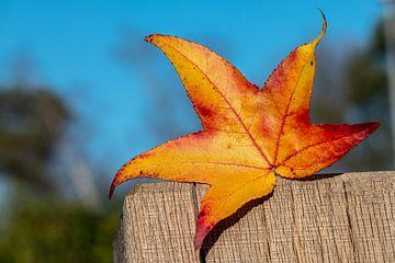 Blad van de boom, mooie kleuren van Harmen Goedhart