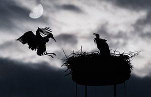 Silhouet van twee ooievaars bij maanlicht van Chihong