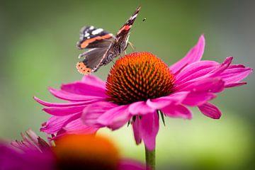 Vlinder op bloem van Sybren Visser